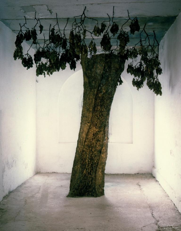 albero-1998-01