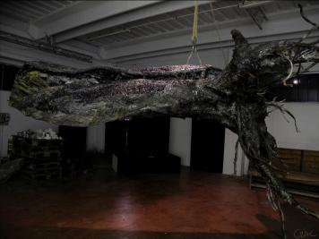 albero-radice-02